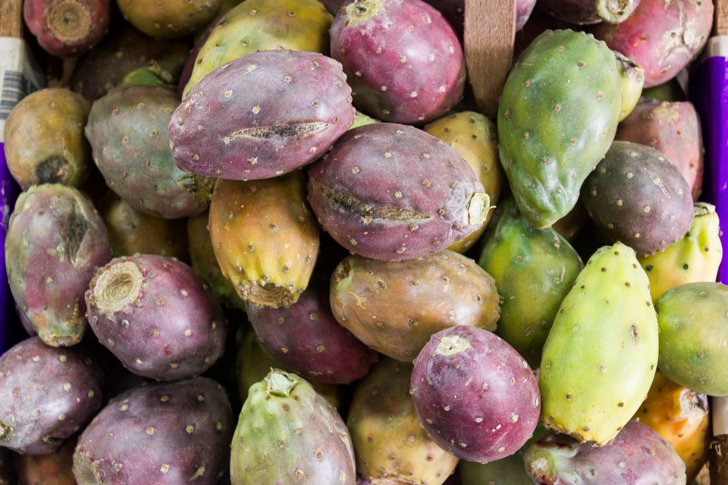 Unique Peruvian Fruit_Fruits to try in Peru Tuna Andina Prickly Pear_Eating Fruit in Peru