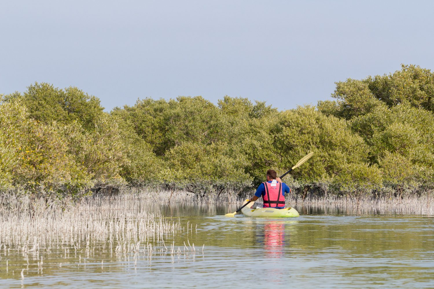 What to do in Doha Layover Stopover Travel Guide_Al Thakira Mangroves Nature Reserve Qatar_Kayak