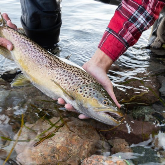Coastal fly fishing_where to fish in Denmark_sea trout