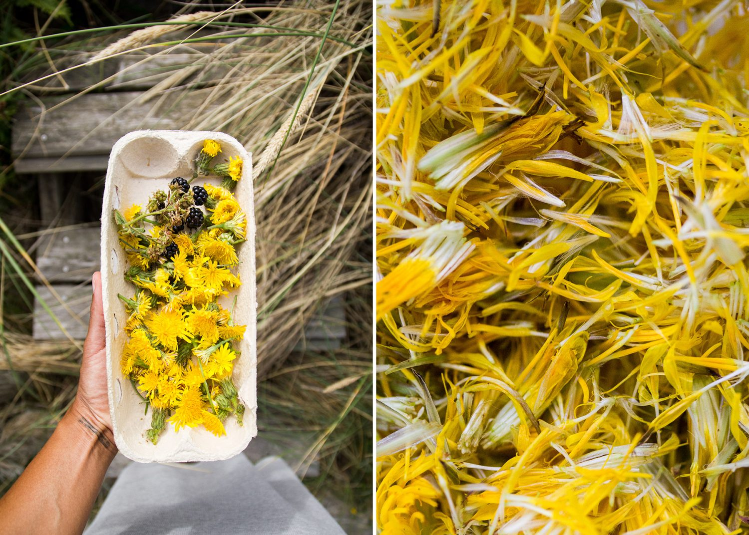 An Easy Recipe for Dandelion Soda - to what place